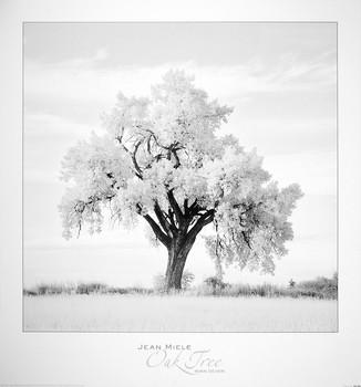 Oak Tree Reproducere