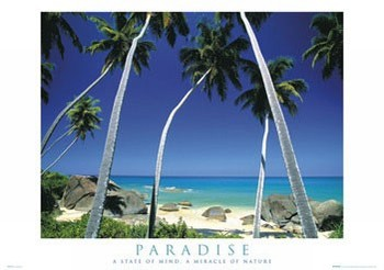 Paradise - palmy Poster