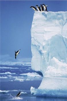 Penguins - steve bloom Poster