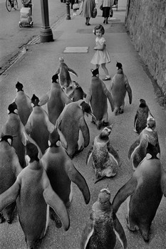 Penquins day out Poster