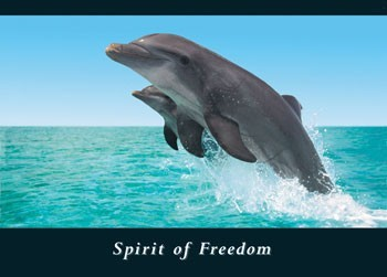Spirit of freedom Poster
