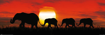 Sunset Elephants Poster