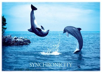 Synchronicity – dolphins Poster