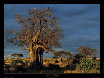 Tanzania Reproducere