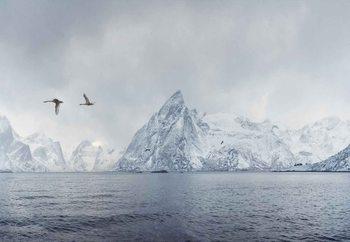 Arctic Flight Poster Mural XXL