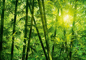 BAMBOO FOREST Poster Mural XXL