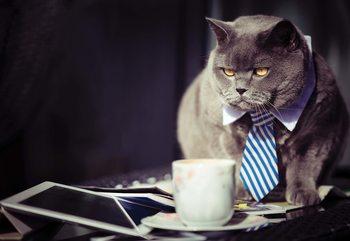 Cat Boss Poster Mural XXL