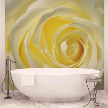 Fleur Rose Blanc Jaune Poster Mural XXL