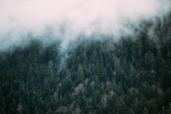 Fog over the forest Poster Mural XXL