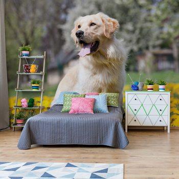 Golden Retriever Dog Poster Mural XXL