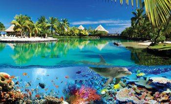 Ile Paradisiaque avec des Coraux et des Dauphins Poster Mural XXL