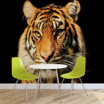 tigre Poster Mural XXL