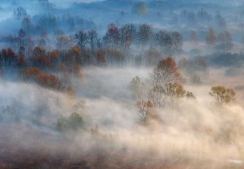 Trees In The Early Morning Fog Poster Mural XXL