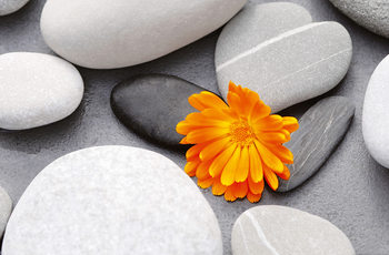 Poster ACHIM SASS -  heart among stones
