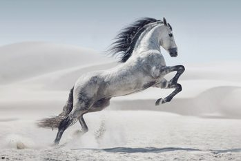 Плакат Horse - Andaluz