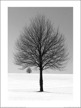Ilona Wellman - Winter Tree Kunstdruck
