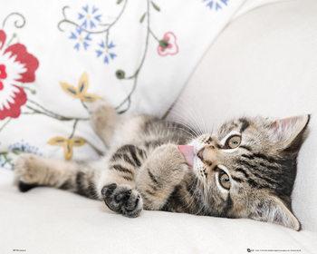 Poster Kätzchen - Licking Paw