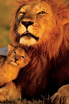 Poster Lejon - Lion and cub
