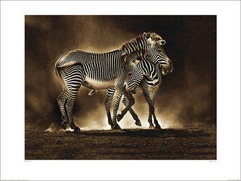 Konsttryck Marina Cano - Zebra Grevys