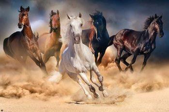 Poster Paarden - Five horses