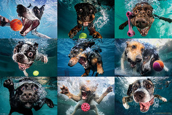 Poster Underwater Dogs