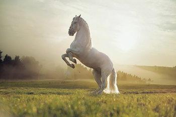 Horse - White Proud Horse Print på glas