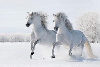 Horses - Two White Horses Print på glas