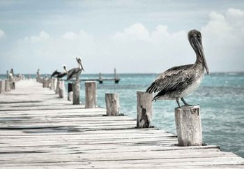 Pelican Patrol Print på glas