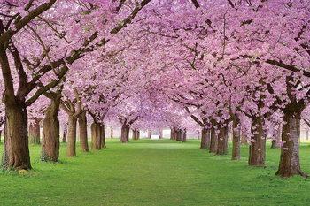 Pink Blossoms - Way Print på glas