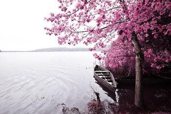 Pink World - Blossom Tree with Boat 1 Print på glas