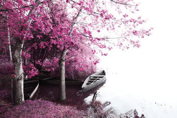 Pink World - Blossom Tree with Boat 2 Print på glas