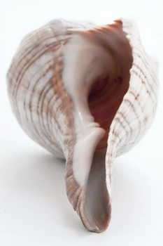 Shell - Bottom Print på glas