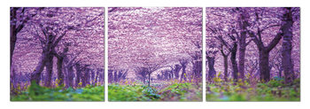 Quadro  Blossoming orchard