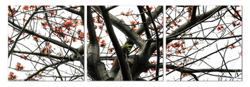Quadro Look into the tree