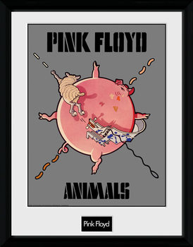 Pink Floyd - Animals zarámovaný plakát