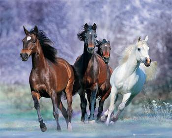 Running Horses - Bob Langrish rámovaný plakát