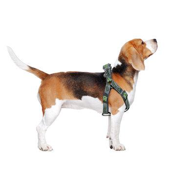 SΣαμαράκι σκύλων tar Wars: The Mandalorian