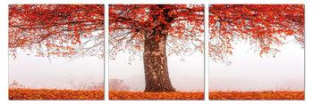 Alone tree in autumn Schilderij