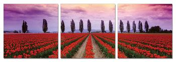 Flower fields Schilderij