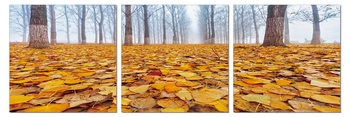 Ground covered with leaves Schilderij