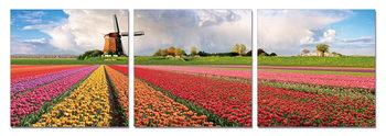 Holland - Fields with Tulips Schilderij