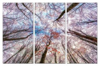 Looking into the blooming trees  Schilderij