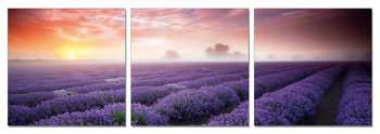 Mist over the Lavender Field Schilderij