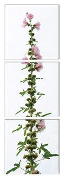Modern design - flower with pink blossoms Schilderij