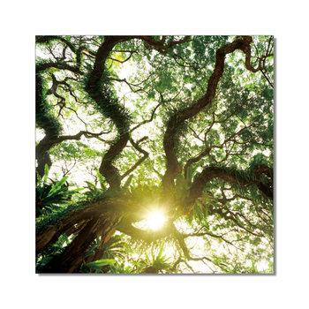 Old Green Treetop Schilderij