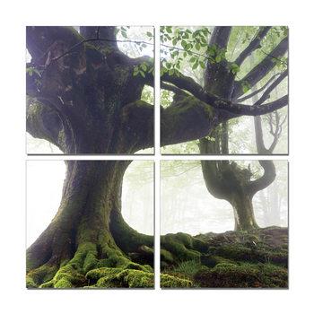 Spreading tree Schilderij