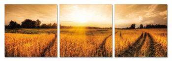 Sunshine above the field Schilderij