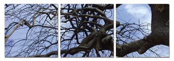 Tree branches Schilderij