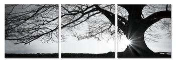 Tree - Silhouette (Zwart Wit) Schilderij