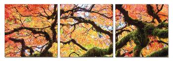 View of autumn tree's crown Schilderij